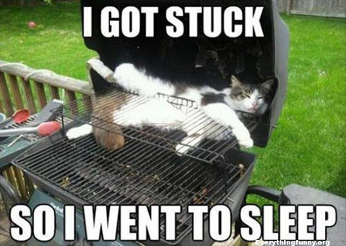 funny cat photo sleeping in bbq i got stuck so i went to sleep