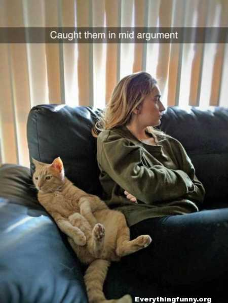 funny cat picture wife caught them in mid argument