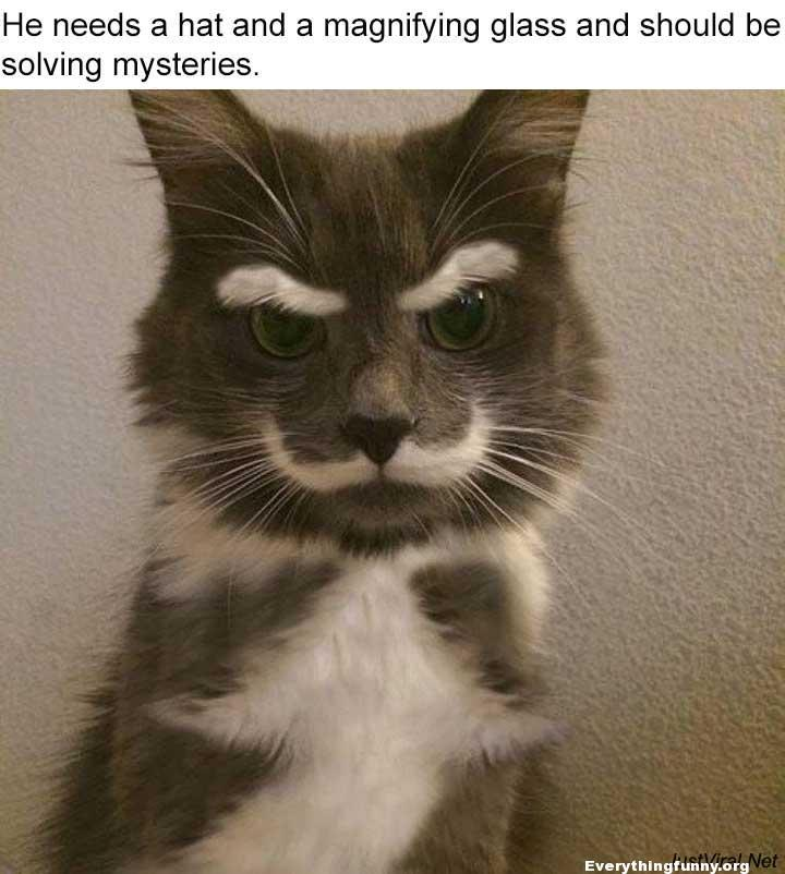 funny cat caption has white eyebrows and mustache needs a hat and magnifying glass solving mysteries