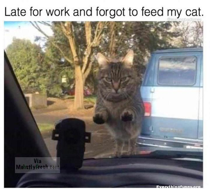 funny cat caption late for work and forgot to feed my cat