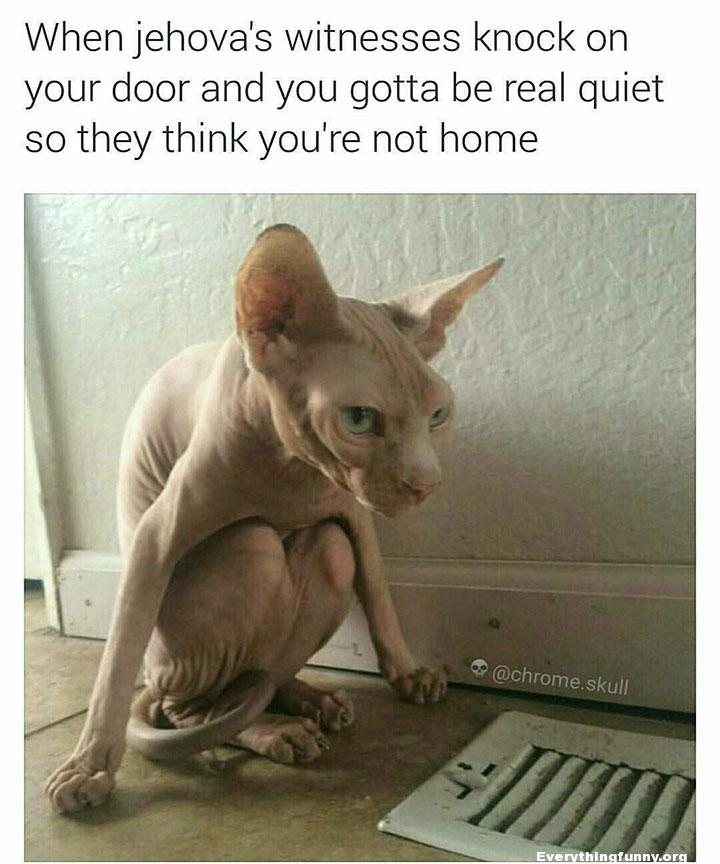 funny cat hiding when jehova's witnesses knock on your door and you gotta be real quiet so they think you're not home