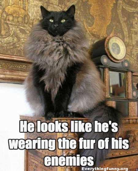 funny cat caption looks like he's wearing the fur of his enemies