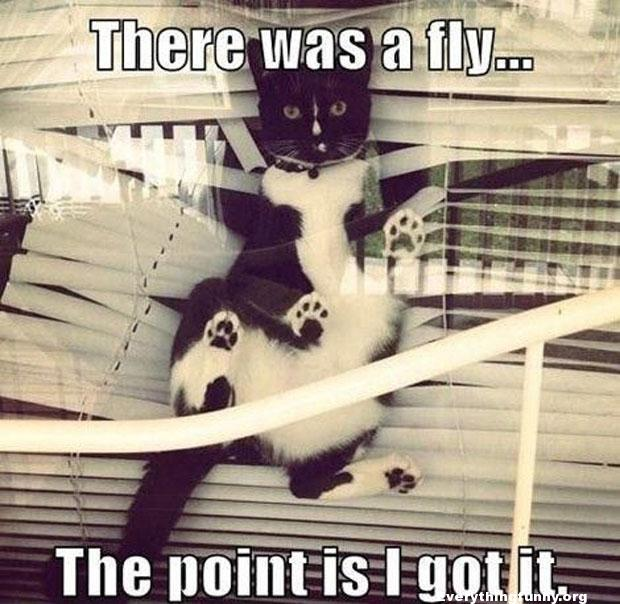 funny cat picture caught in blinds there was a fly the point is i got it