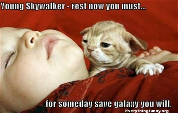 funny star wars picture young skywalker rest now you must puppy looks like little yoda