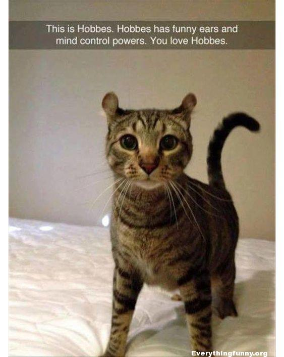 funny caption cat picture this is hobbs hobbs has funny ears and mind control powers. you love hobbs