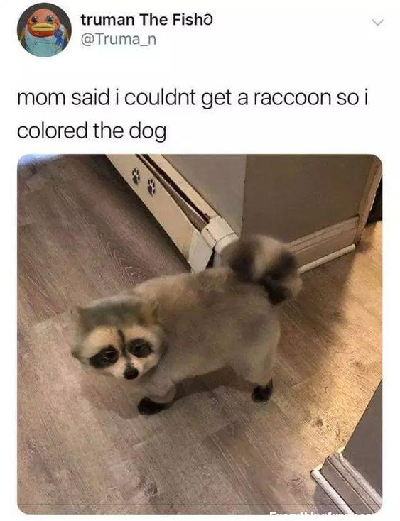 funny post mom said i couldn't get a raccoon so I painted the dog