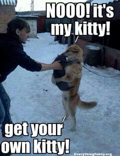 funny capttion dog holding cat no its my kitty get your own kitty