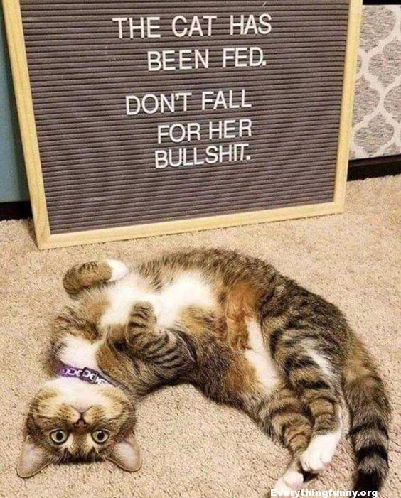 funny cat caption funny sign the cat has been fed don't fall for her bullshit