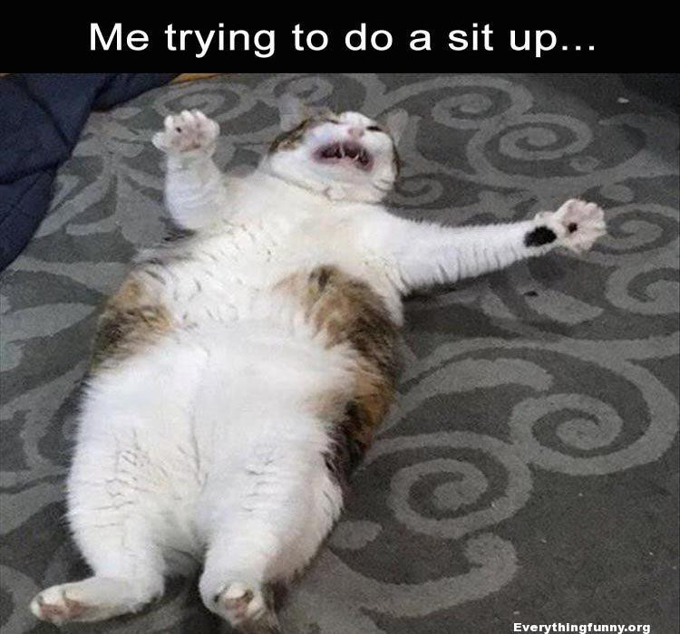 funny cat caption picture me trying to do a sit up