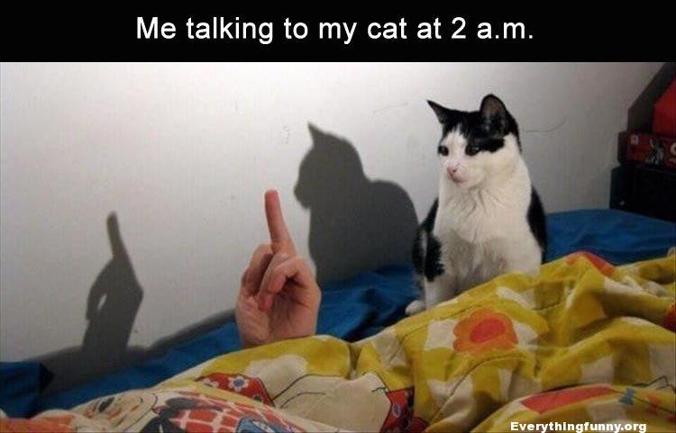 funny caption me talking to my cat at 2 am giving him the finger