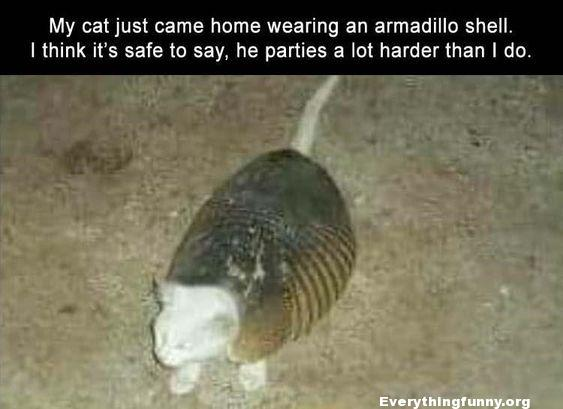 funny caption my cat just came home wearing an armadillo shell. I think its safe to say he parties a lot harder than i do