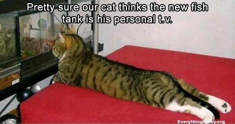 funny cat caption pretty sure our cat thinks the new fish tank is his personal tv