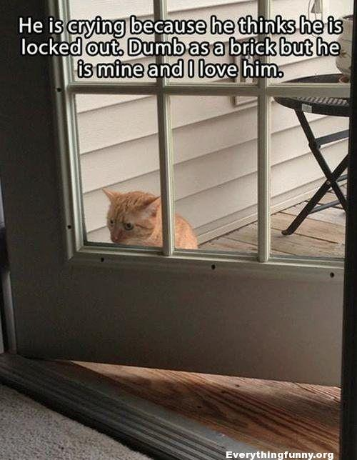 funny cat caption crying cat thinks he's locked out even though door is open dumb as brick but he is mine and i love him