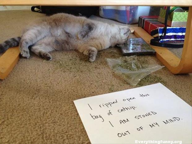 funny caption funny cat shaming i ripped open the bag of catnip i am stoned out of my mind