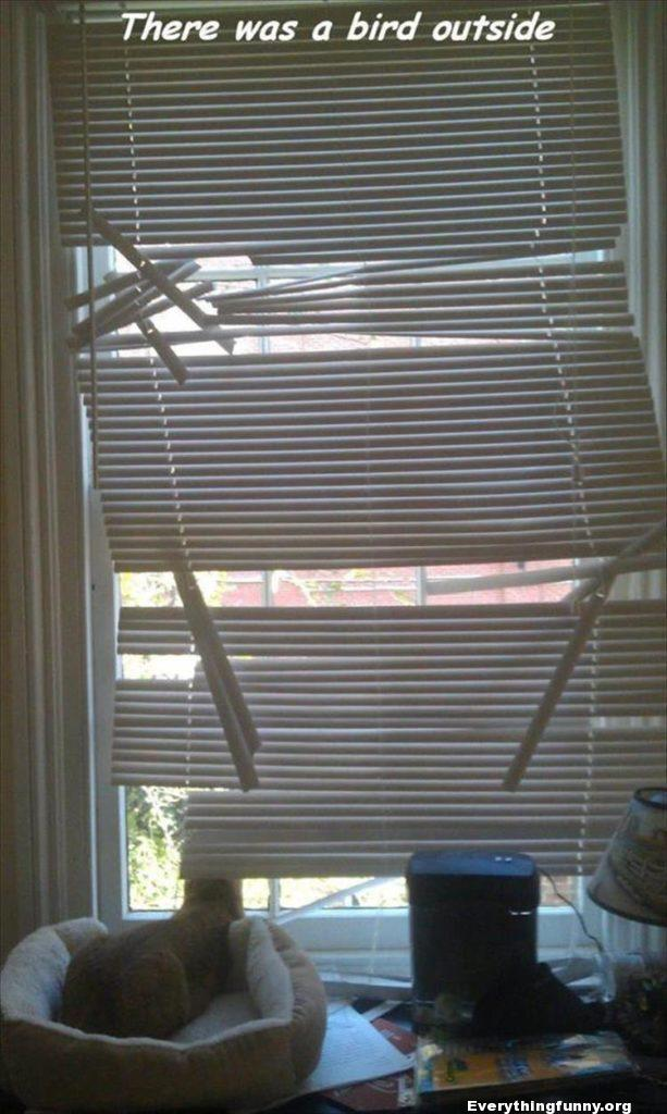 funny cat caption window blinds destroyed by cat - there was a bird outside