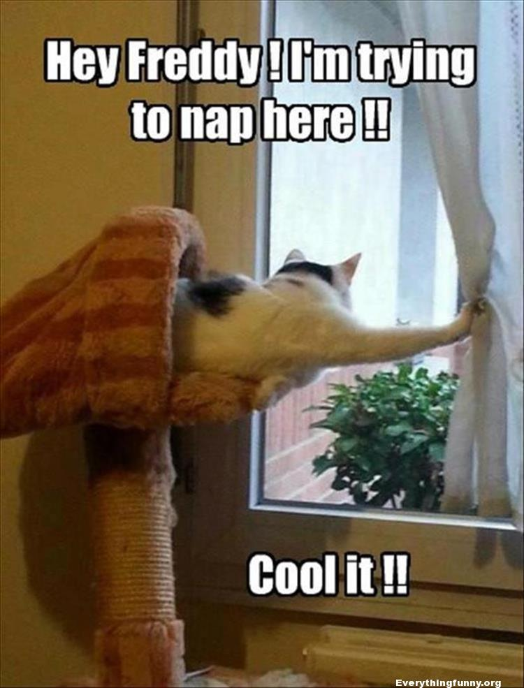 funny cat meme funny cat caption hey freddie i'm trying to sleep here