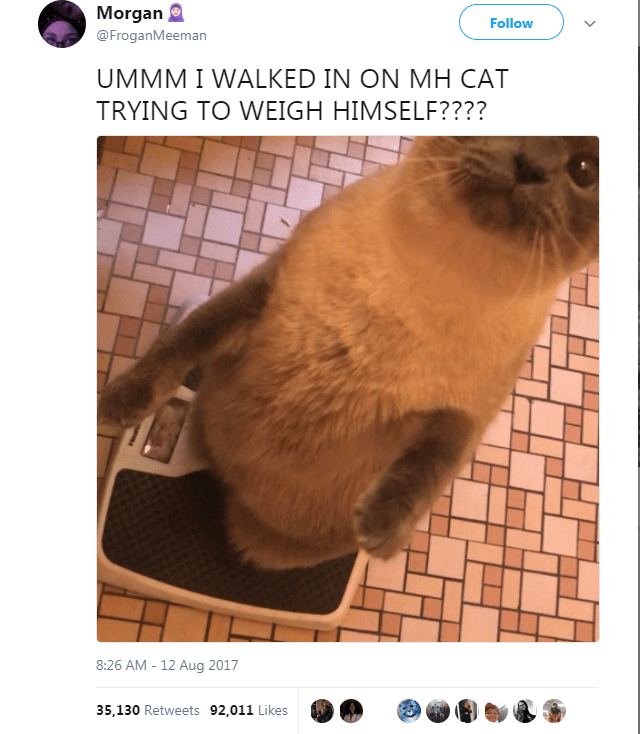funny post i walked in on my cat trying to weigh himself?
