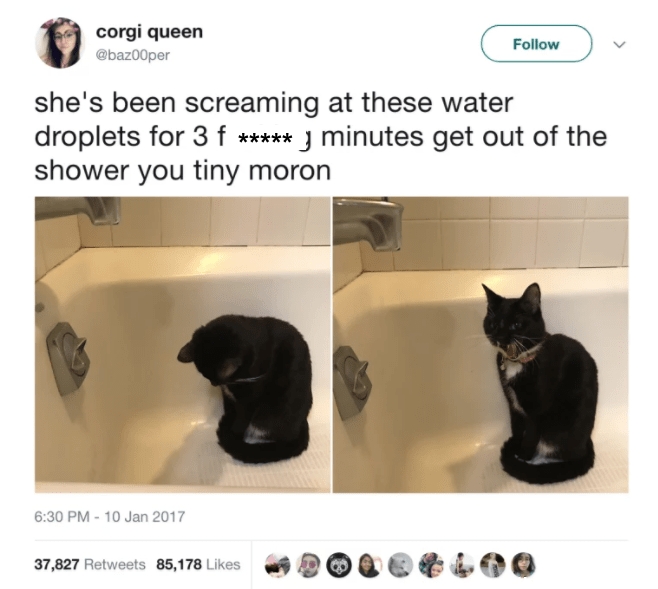funny cat caption screaming at water droplets for 3 minutes get out of the shower you tiny moron