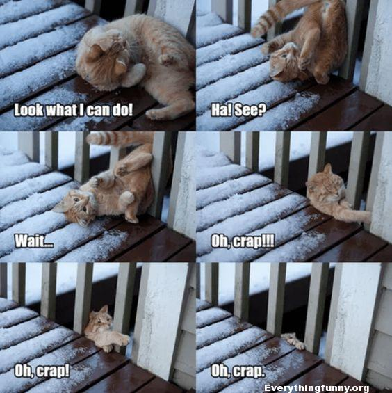 funny cat funny cat caption cat stretches and falls through porch