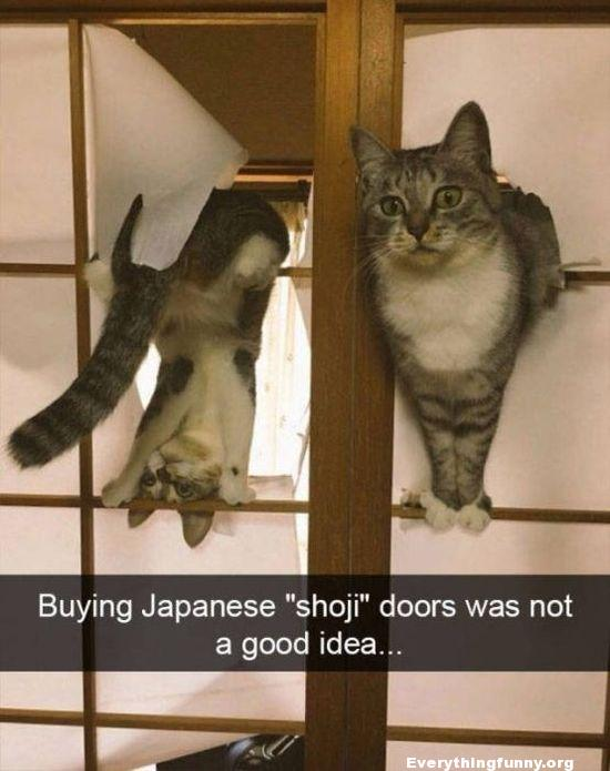 funny cat picture buying japanese shoji doors was not a good idea with 2 cats in the house went right through them