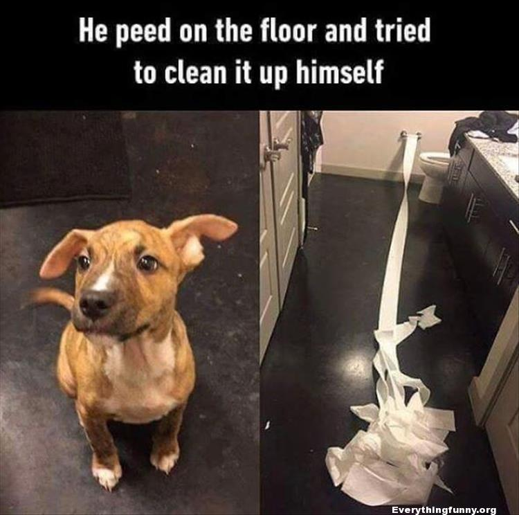 funny dog picture, dog photo, dog peed on the floor and tried to clean it up himself with toilet paper