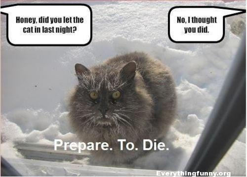 funny cat picture did you let the cat in last night i thought you did frozen cat in snow prepare to die