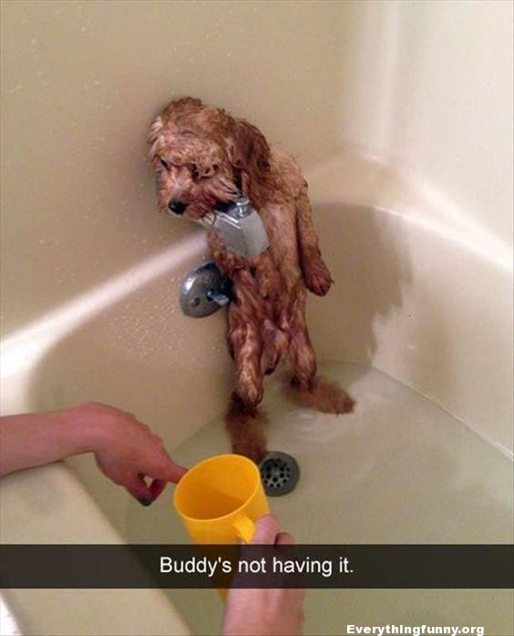 funny caption dog standing in corner of tube doesn't want bath buddy's not having it