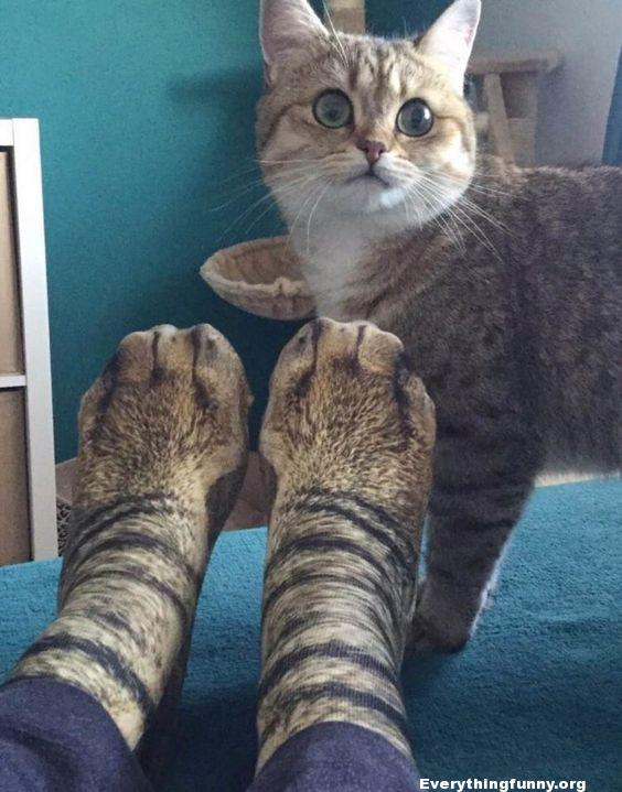 funny cat picture funny cat reaction to cat paw socks on persons feet