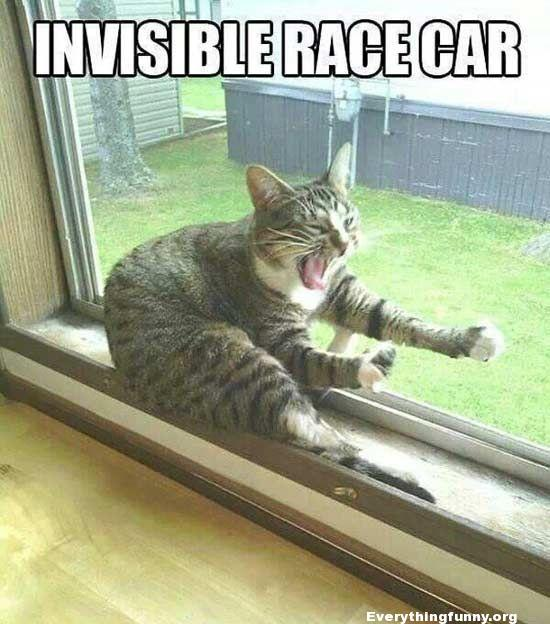 funny cat caption invisible race car funny cat photo