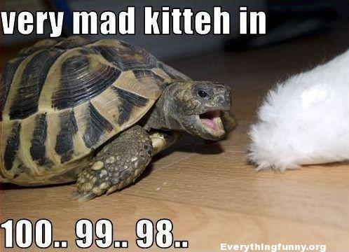 funny caption slow turtle about to bite kitten very mad kitten in 100...99..98..