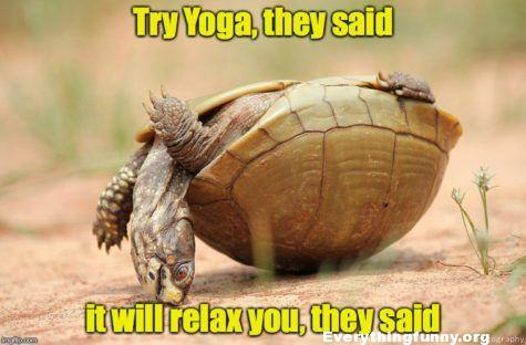 funny caption turtle on its back do yoga they said it will be fun they said