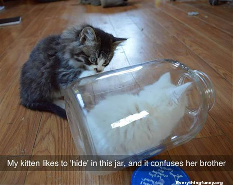 funny cat caption my kitten likes to hide in this jar and it confuses her brother