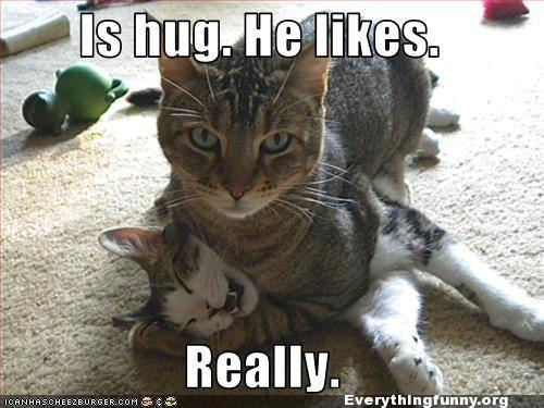 funny cat meme caption is hug. he likes. really chokes other cat