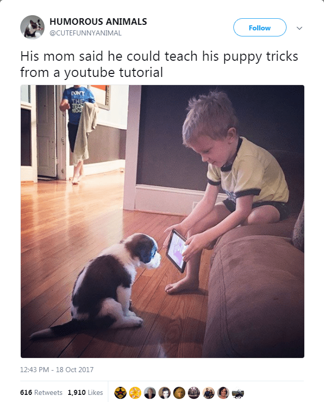 funny post, funny twitter post mom told him he could teach his puppy tricks from a youtube tutorial - little boy shows puppy video on ipad
