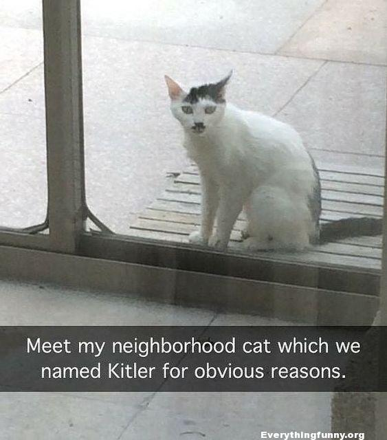 funny cat caption picture meet my neighborhood cat which we named Kitler for obvious reasons