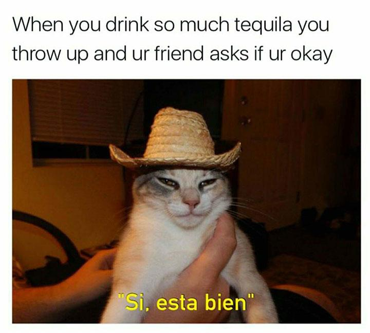 funny caption funny meme funny cat when you drink so much tequila you throw up and ur friend asks if ur okay si, esta bien