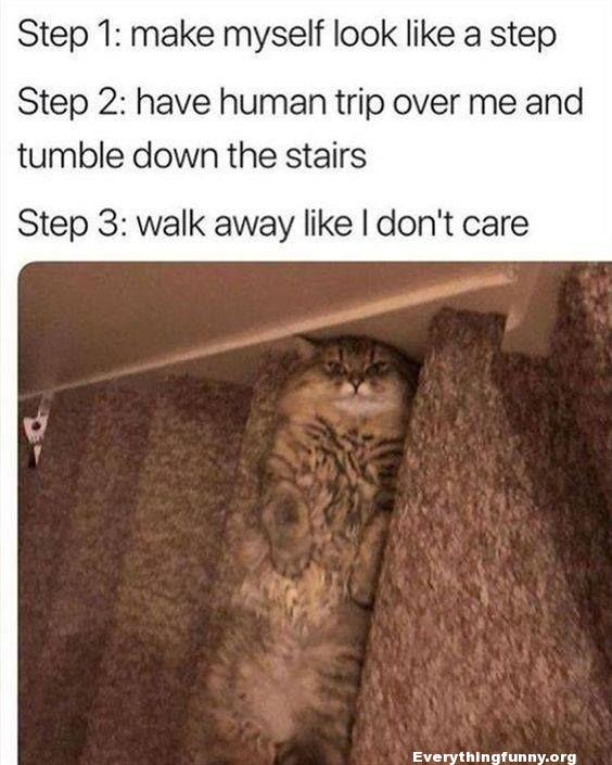 funny cat post cat hides on step and looks just like carpet