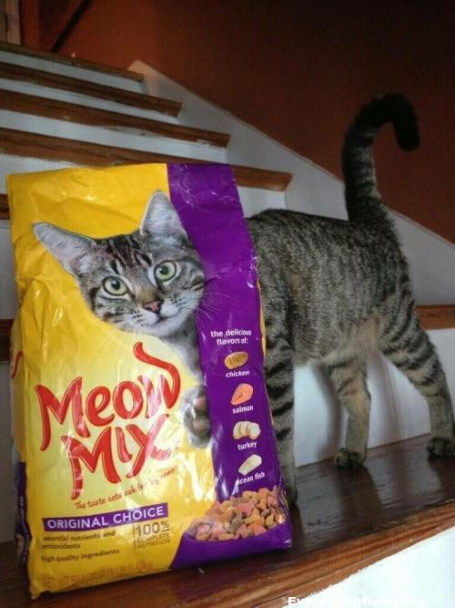 funny cat photo perfectly timed photo of cat standing behind cat food bag matches  perfectly