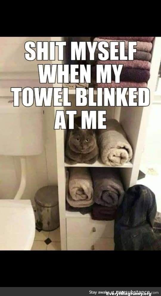 funny caption, funny cat caption my towel blinked at me