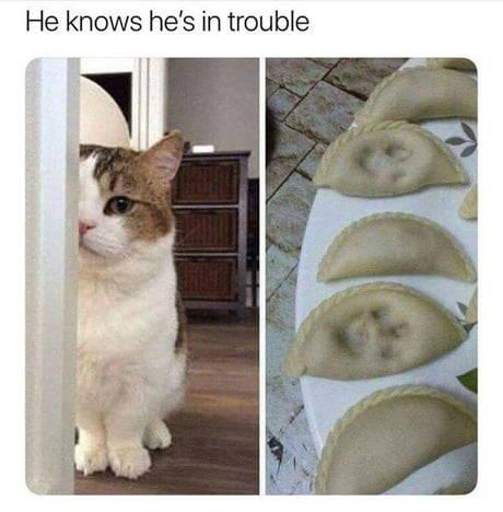 funny cat caption he put paws in dumplings, knows he's in trouble