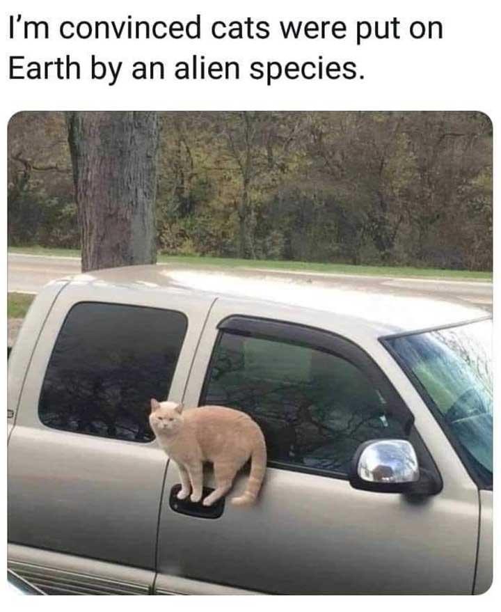funny caption funny cat picture cat standing on car door handle I'm convinced cats were put on earth by alien species