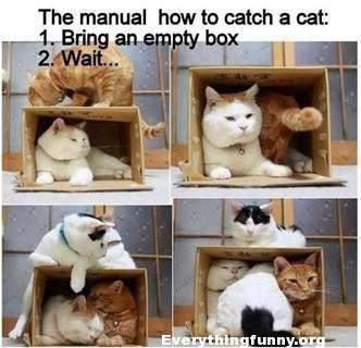 funny caption, funny cat picture the manual how to catch a cat bring an empty box now wait