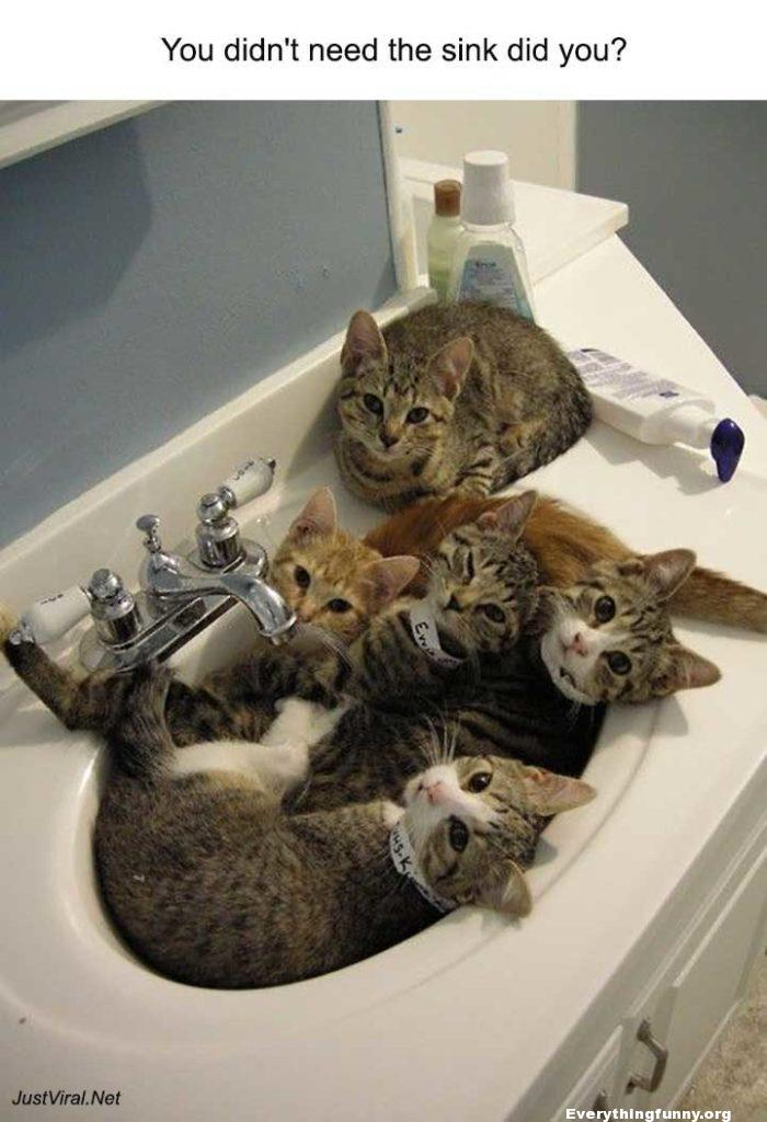 funny you didn't need the sink did you sink filled with cats