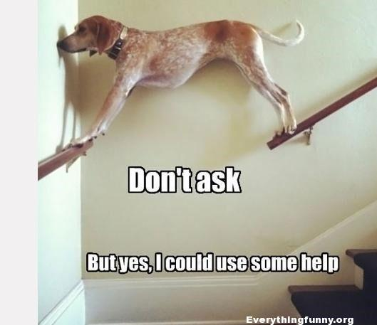 funny dog stuck standing between two railings off the floor don't ask