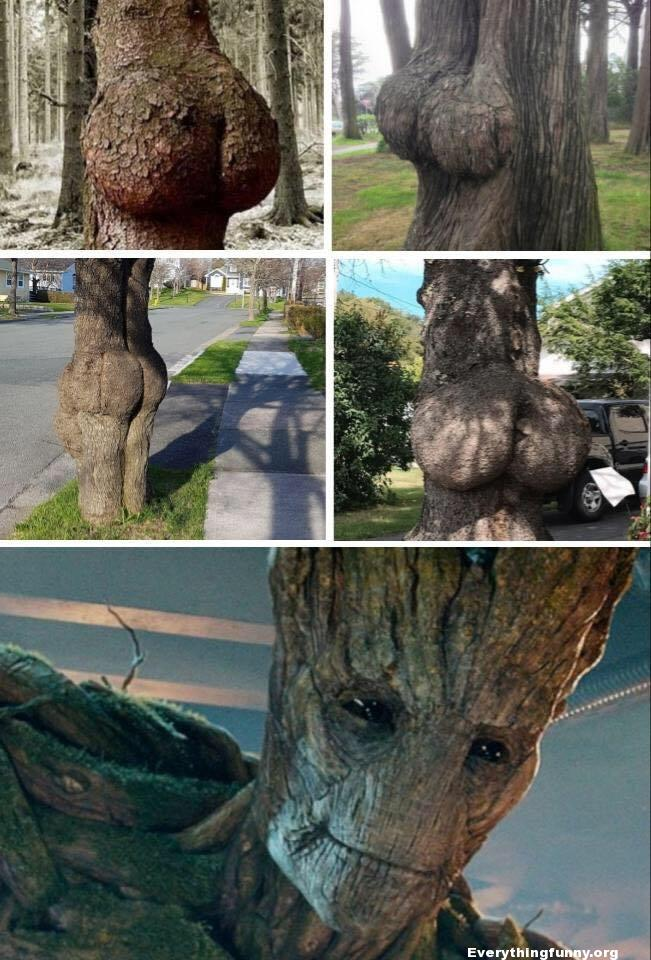 funny photos of trees that look like big butts asses with a picture of a turned on Groot at the bottom