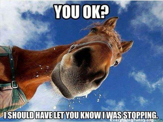 funny horse picture funny caption picture horse looking down are you OK i should have let  you know I was stopping