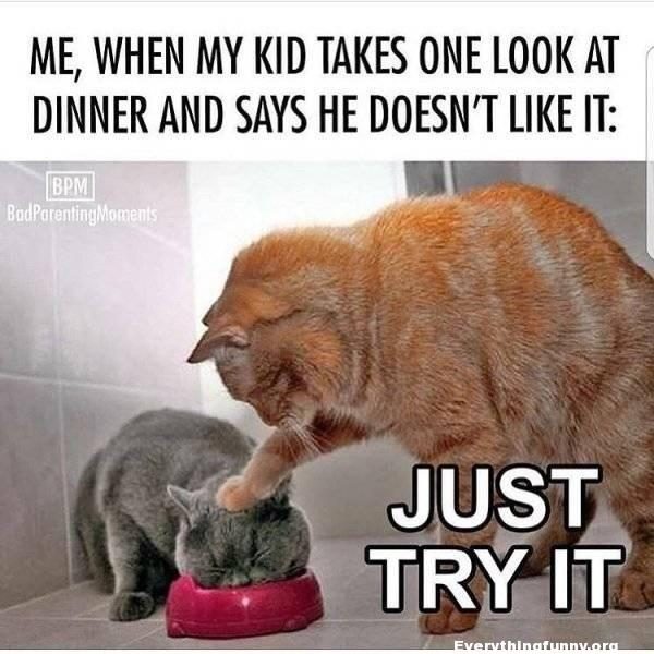 funny caption me when my kids take one look at dinner and says he doesn't like it - cat pushes kittens face in bowl just try it
