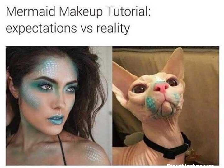 funny caption, funny post mermaid makeup tutorial, expectations vs reality funny cat with makeup on