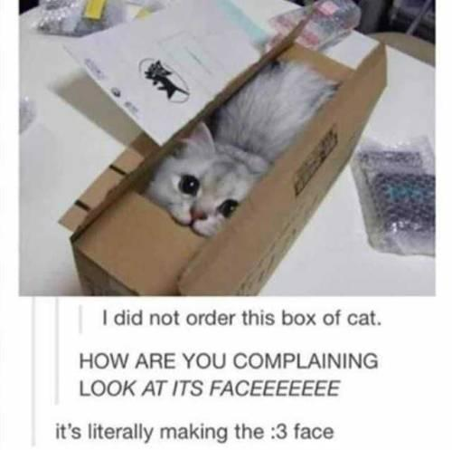 funny post funny cat picture i did not order this box of cat it is literally making the :3 face