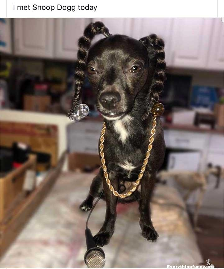 funny dog picture, funny caption i met snoop dog today dog looks exactly like snoop dog rapper